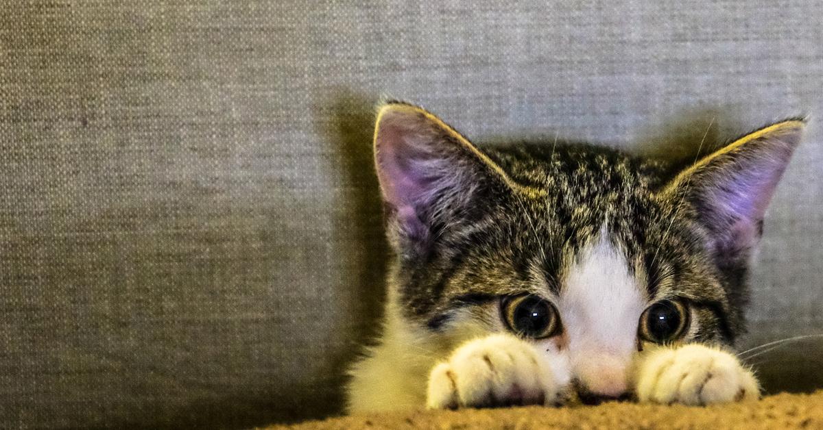 bewakingscamera kat