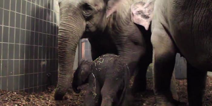 olifant sanuk