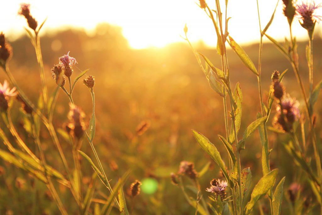 zonsondergang bloemen