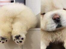 het schattigste hondje op instagram
